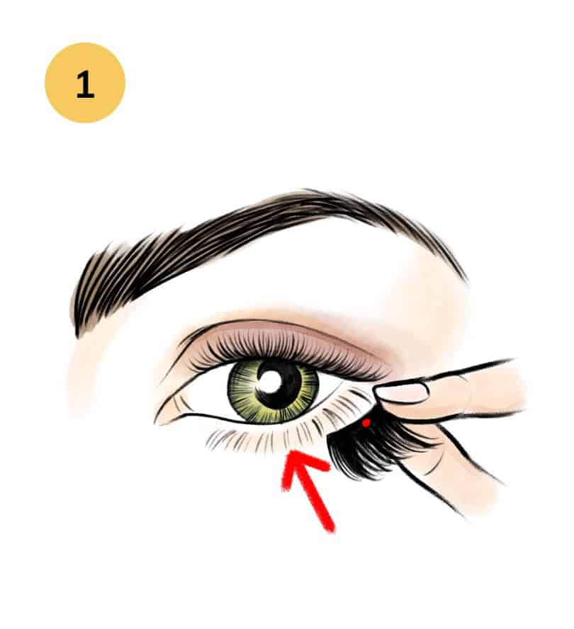 c774805a548 Place BOTTOM lash (with red dot) on the outer half of your lower lash line,  as close to your waterline as possible.